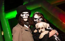 Thumb resized halloween scary dublin dog rollingnews