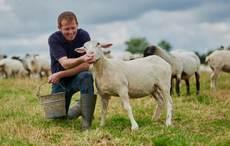 Thumb_irish-farmer-sheep-getty