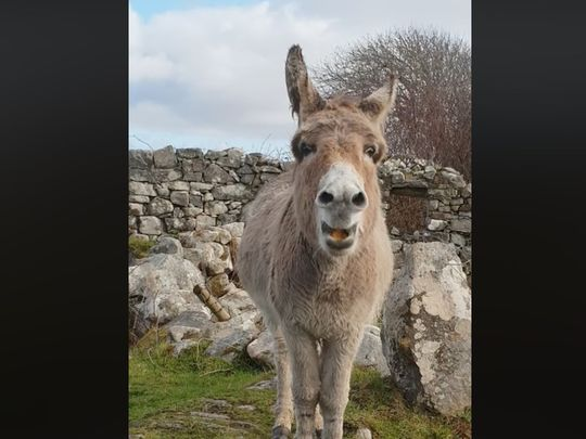 Harriet the Irish singing donkey becomes a viral sensation