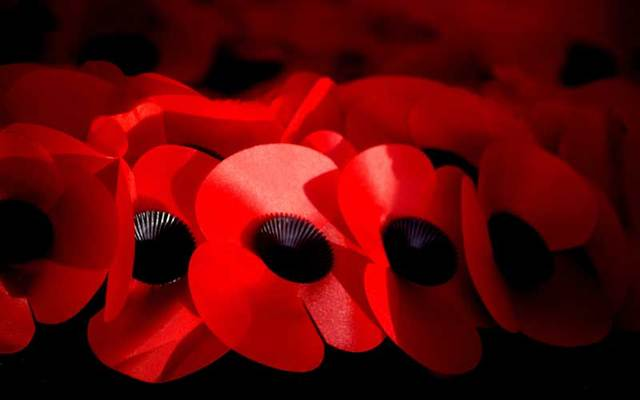 Remembrance Day poppies.