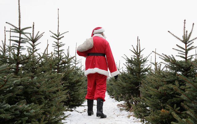 Ireland could be facing a Christmas tree shortage