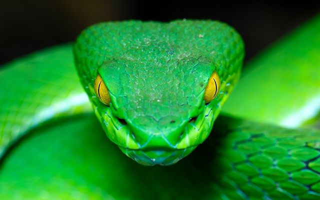 Wasn\'t Saint Patrick meant to deal with all the snakes in Ireland?