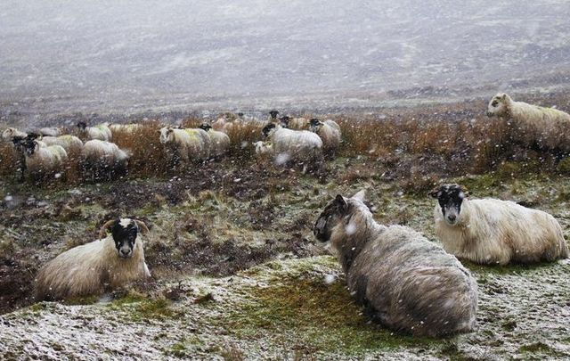 Ireland set to turn very cold this week