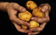 Thumb_mi_hands_dirty_potato_potatoes_istock__3_