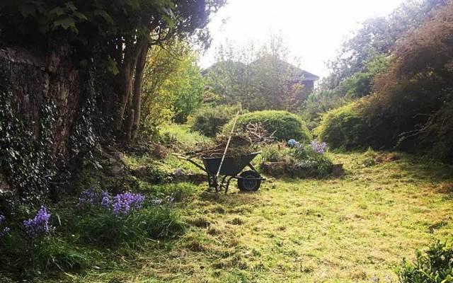 An Irish woman has found a secret garden in her backyard.