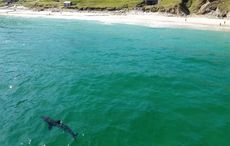 Thumb_keem_bay_shark_2___sean_molloy_achill_tourism