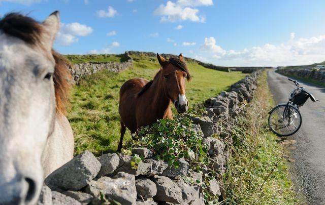 Horses on the Aran Islands.