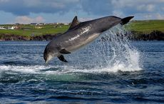 Dingle's Fungie becomes oldest dolphin in history to maintain human contact