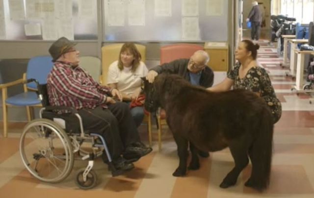 Jet the Shetland pony spreads joy at a Co Wicklow nursing home