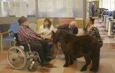 Thumb_irish_horse_welfare_trust_nursing_home___ihwt_fb