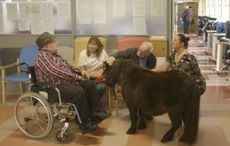Thumb_irish_horse_welfare_trust_nursing_home___ihwt_fb