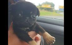 Thumb_bobby_coolronan_dog_rescue_facebook