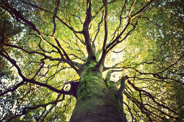 Fighting Climate Change: Ireland is to plan millions of trees over the next 20 years.