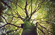 Thumb_tree_from_the_bottom_getty