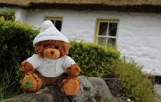 Thumb_paddy_pal_teddy_bear_main