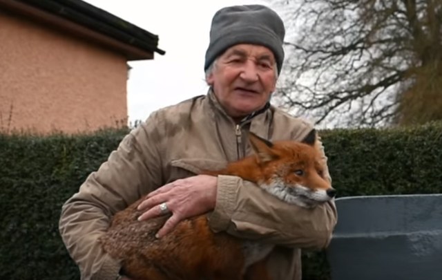 Patsy Gibbons and one of his foxes.