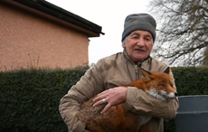 Thumb patsy gibbons rescued foxes fiona aryn youtube