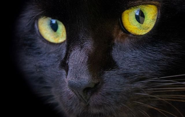The superstition of black cats has roots in Irish folklore.