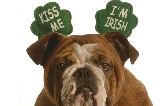 America's biggest Irish day can be a nightmare. Here's some of the reasons it might be a good idea to stay home.