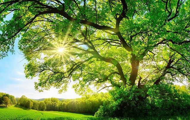 Which Tree Are You Celtic Calendar And Astrology Irishcentralcom