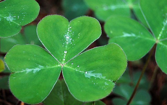 Where did the symbols of Irishness for St Patrick's Day, like the shamrock, come from?