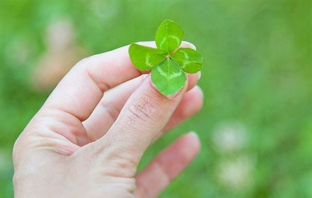 A four-leaf clover has come to symbolize luck, but what\'s the meaning of \'the luck of the Irish\'?