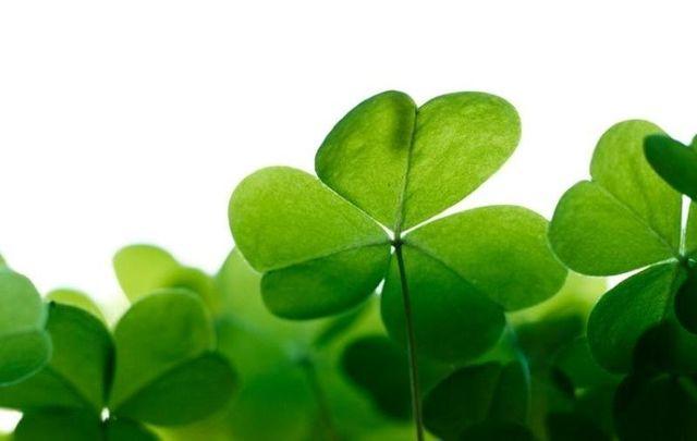 From Fionn Mac Cumhaill to the Children of Lir, enjoy the top ten stories from Irish mythology.