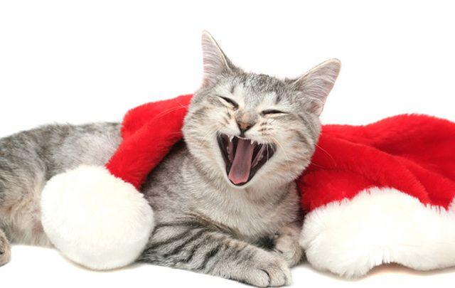 Irish Christmas jokes guaranteed to make the cat laugh ...