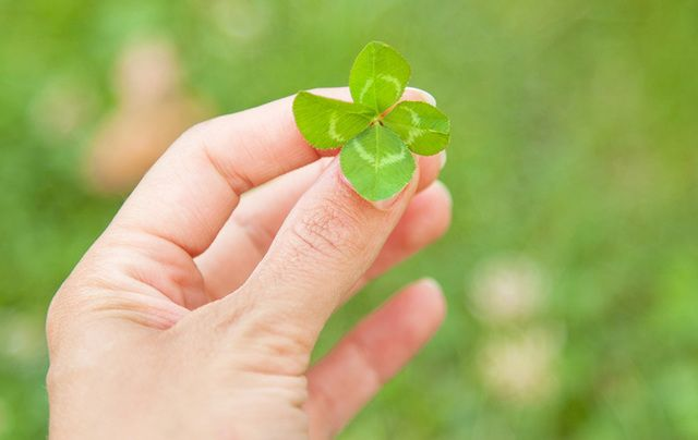 A four-leaf clover...the Irish luck jackpot!