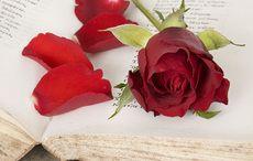 Thumb_flower_love_poem_poems_book_st_valentine_istock