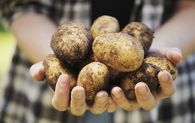 Happy Potato Day, to our US readers. We'll be celebrating with Ireland again for the Irish National Potato Day on October 7.