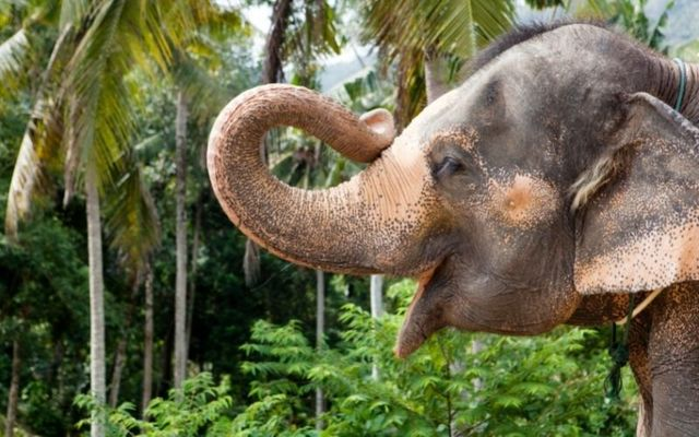 Cindy the circus elephant is memorialized in Castlerea, Co Roscommon (stock photo)