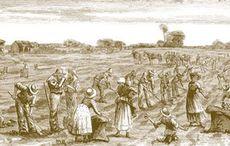 Thumb_1-irish-settlers-potato-harvest-illustrated-australian-news-state-library-of-victoria