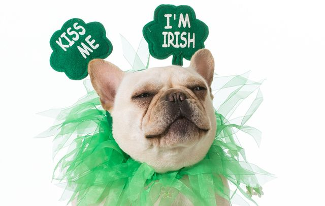 Did you know that St. Patrick wasn't even Irish? Or that the Irish can't claim credit for St. Patrick's Day parades? Find out more in our weirdest and most wonderful facts.