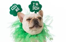 Thumb_weird-wonderful-st-patrciks-day-facts