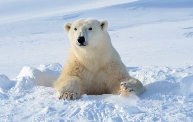 DNA evidence links polar bears to Irish brown bears