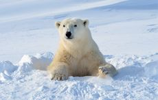 International Polar Bear Day: DNA proves Irish brown bears related to polar bears