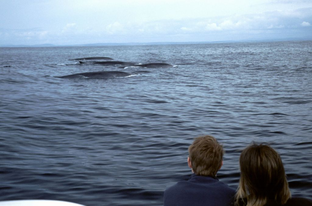 Whale watching in West Cork. Photo: Failte Ireland