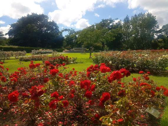 The Rose Garden in Tralee town.