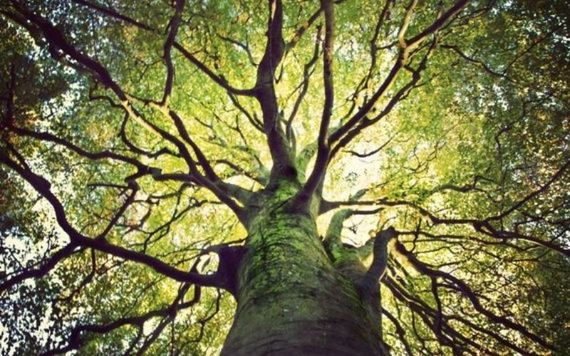 An Irish Heritage Tree is planted in a forest on the breathtaking Golden Vale of Ireland, County Tipperary