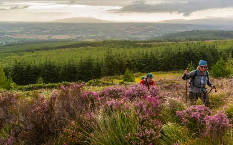 The Glen of Aherlow: is the perfect place for loved-up ramblers