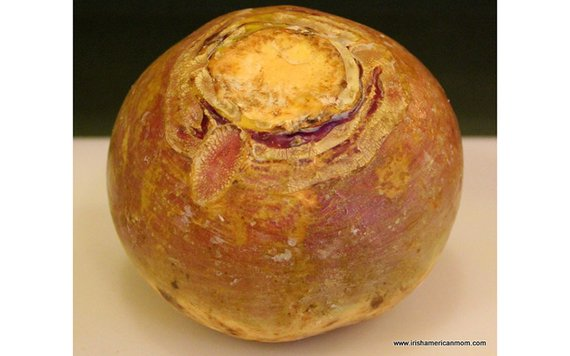 A rutabaga...what the Irish call turnip.