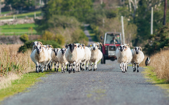 """""""Our old farm is five miles from the main road, above in Connemara."""""""