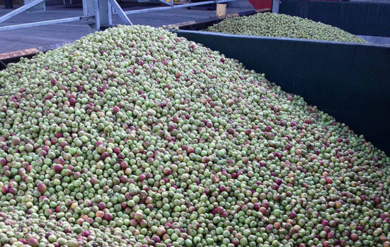 Magners Apples